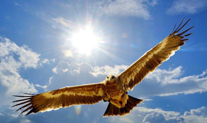 Frei sein wie ein Adler!